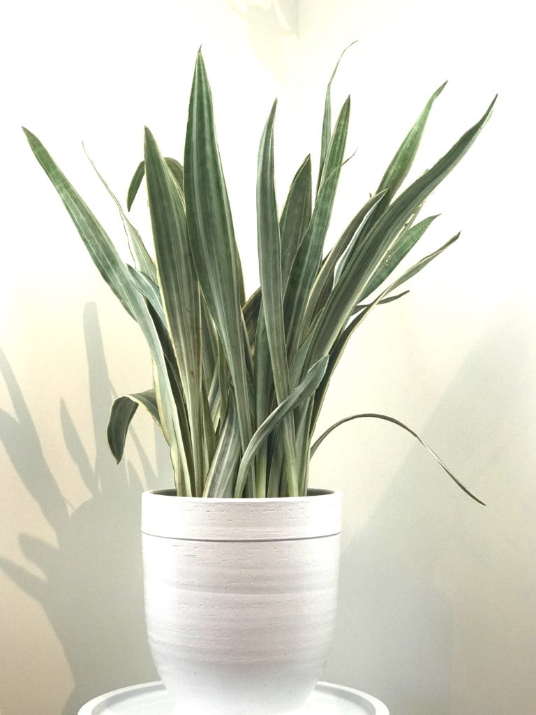 easy to maintain indoor plants